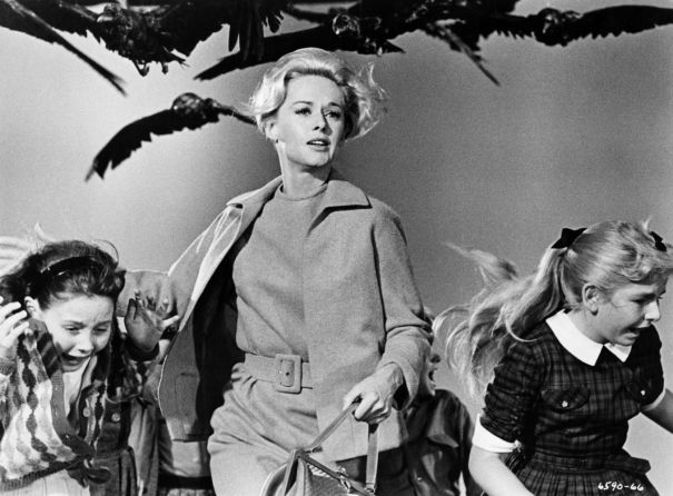 'The Birds' – 55 years