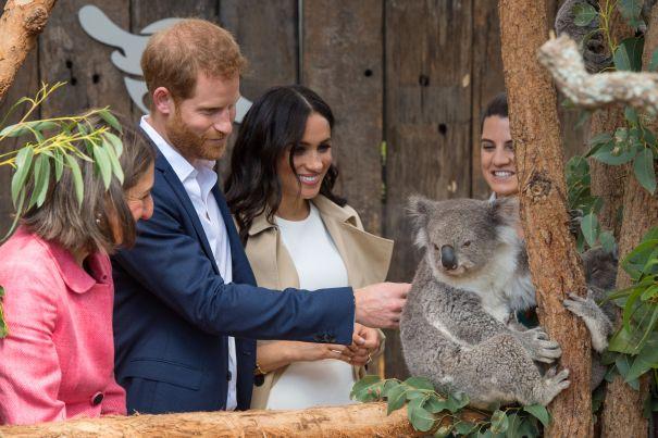 Saying Hello To Ruby The Koala