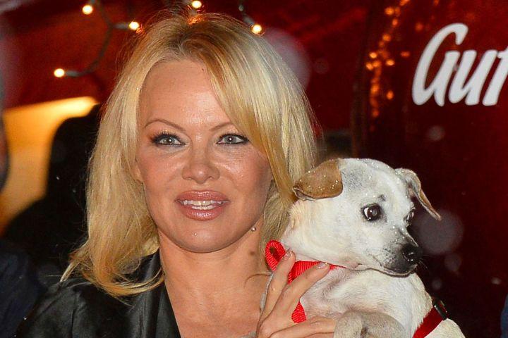 Pamela Anderson. Photo: BabiradPicture/Shutterstock