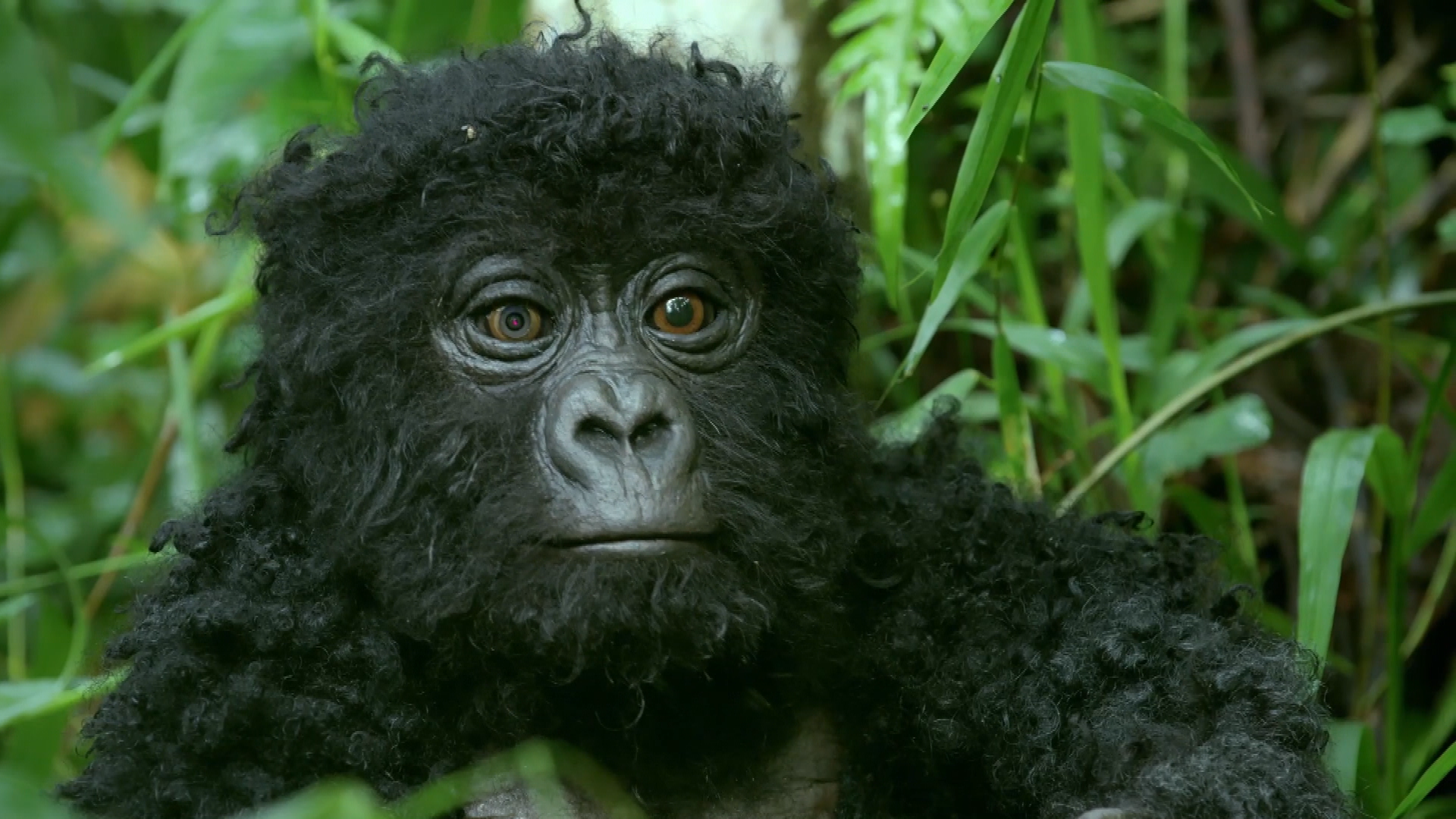 Watch: Exclusive First Look At Second Season Of BBC Earth's 'Spy In The Wild'