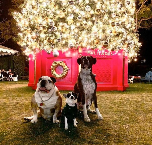 Yannick Bisson's Dogs Star In Christmas Message