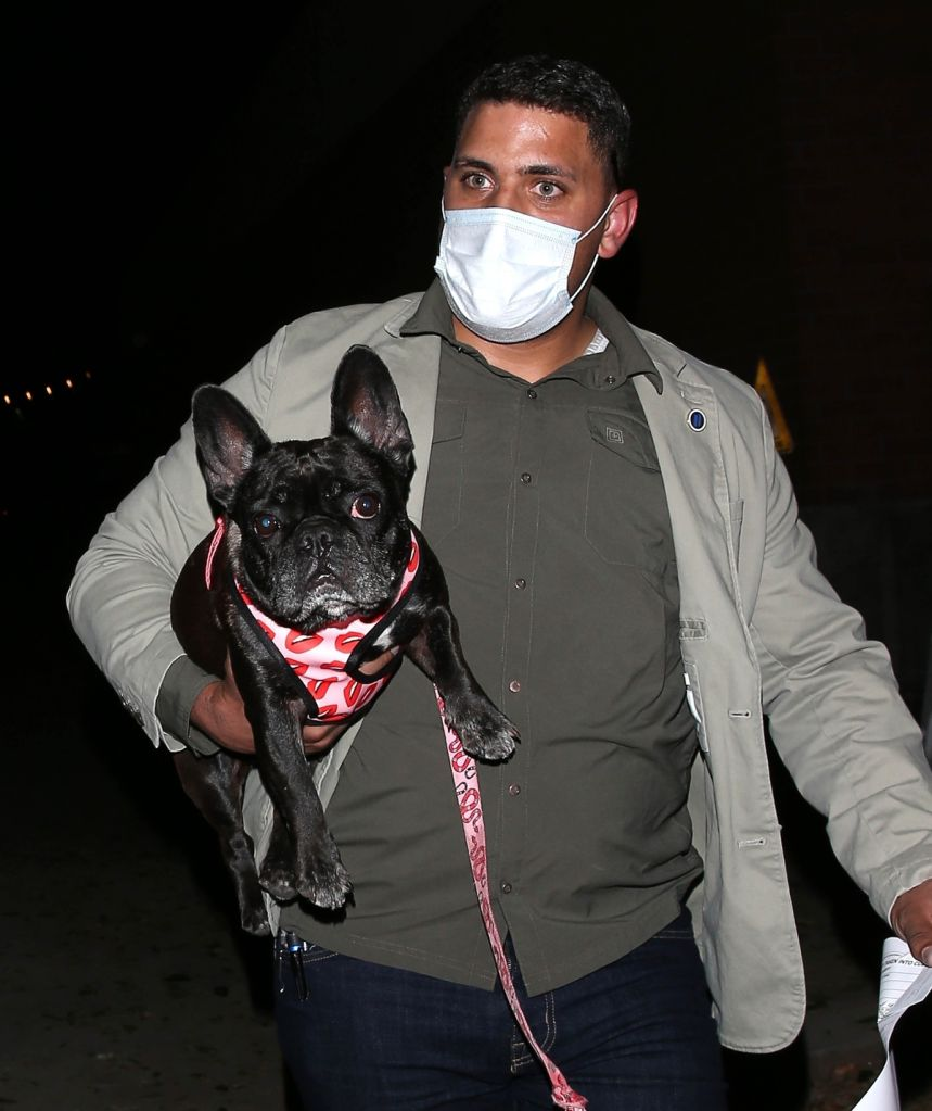 Lady Gaga's bodyguard with recovered French Bulldog. Photo: Backgrid