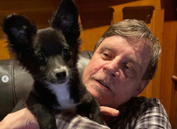 Mark Hamill Adopts Adorable Molly Mae