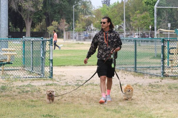 Gavin Rossdale And His Tiny Dogs