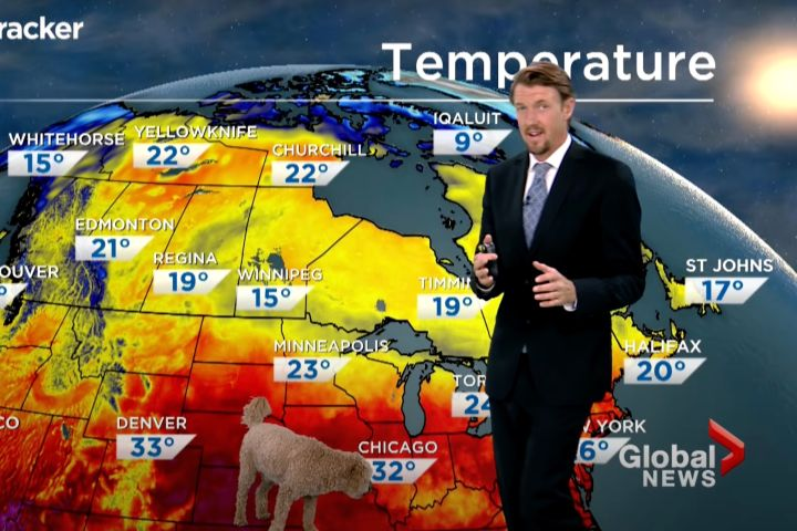 Global News Weather Forecast Hungry Dog Storm Becomes Virus After  Interrupting Live Forecast - Eminetra Canada